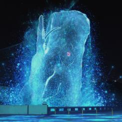 baleine-2